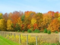 fall-colors-wi